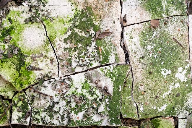 Medical and Economical Dangers of Green Algae